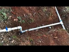 Installing A Drip Irrigation System For Blackberries