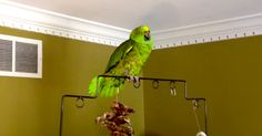 """Poncho the Parrot prays the """"Hail Mary"""" ... If we can teach animals to pray, let's teach our kids to pray. #PrayForPeace"""
