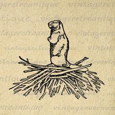 Printable Beaver Digital Image Animal Download Beaver Dam Graphic Vintage Clip Art Jpg Png Eps 18x18 HQ 300dpi No.462 @ vintageretroantique.etsy.com #DigitalArt #Printable #Art #VintageRetroAntique #Digital #Clipart #Download