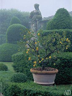 15 Most Popular Asian Garden Design Inspiration for Your Backyard - Home Bigger Formal Gardens, Outdoor Gardens, Garden Cottage, Garden Pots, Design Azul, Landscape Design, Garden Design, Boxwood Landscaping, Citrus Trees