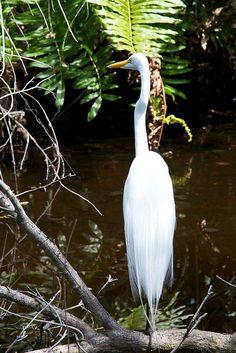 Everglades National Park, Florida.  Photo: besttex, via Flickr