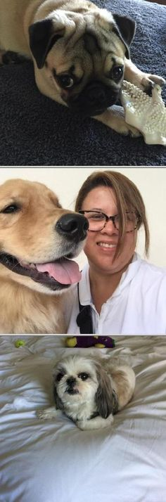 Find a pet sitter you can place your trust on by choosing this company. They are skilled in providing quality overnight pet care services for dogs and cats.