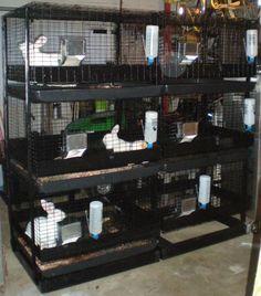 32 Best Rabbit Cages Images Rabbit Cages Rabbit Rabbit Hutches