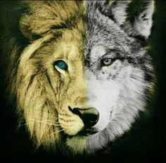 Image shared by Randi Midthun. Find images and videos about beautiful, wolf and lion on We Heart It - the app to get lost in what you love. Wolf Tattoos, Wolf Face Tattoo, Arrow Tattoos, Cat Tattoo, Animal Tattoos, Horse Tattoos, Music Tattoos, New Tattoos, Celtic Tattoos