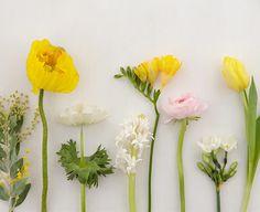 (von links nach rechts): Mimosen, Islandmohn, Anemone, Hyazinthe, Freesie, Ranunkel, Tazetten-Narzisse und Tulpe 'Monte Carlo' / Foto: Silke Zander via Living at home