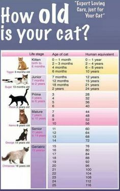 How Old Is Your Cat? Seems Angus and I will hit 60 at the same time...