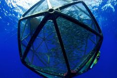 The Velella Mariculture Research Project is testing an unachored drifter pen in Federal waters (3-150 miles offshore) off the Big Island of Hawaii. This innovative form of mariculture - growing fish in the open ocean - uses cutting edge technology and leaves no environmental footprint. The Velella Project could revolutionize sustainable aquaculture.