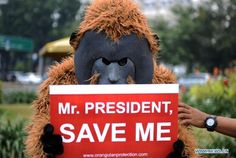 An activist from the Center for Orangutan Protection (COP) dressed in orangutan custume holds a placard during a rally in front of the State Palace in Jakarta, Indonesia, March 14, 2013. COP activists staged a rally Thursay, asking the government to protect Borneo forests, home of the orangutans and other protected species. (Xinhua/Veri Sanovri)