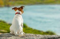 Hund auf Hundepfeife trainieren