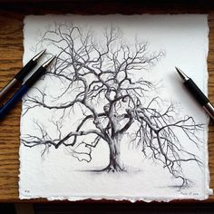 Artist Reflects on Life During Pregnancy by Drawing Trees From Around the World | My Modern Met