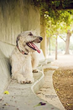 """""""A Day in the Park"""" ---- [Irish Wolfhound]~[Photographer Mel Hammonds - July 28 2011]'h4d'121111"""