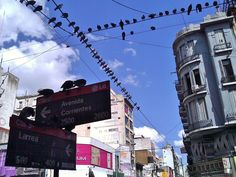 Plenty of pigeons in Buenos Aires