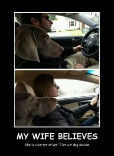 Husband or wife? Dog decides better driver.