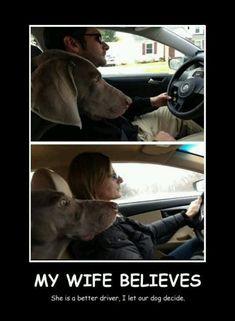 Husband or wife? Dog decides better driver.
