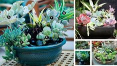 If you want a garden full of beautiful looking and unusual shaped plants, succulents are definitely the way to grow. Succulents add a variety of interest to very ordinary landscapes. Not only do they look exotic but they are surprisingly easy to grow and care for. Most succulents are happy to grow in conditions other …