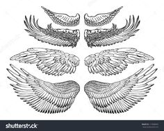 stock-vector-eagle-wings-vector-drawing-117088465.jpg (1500×1203)