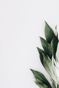 Téléchargez Close-up Of Green Leaves On White Background gratuitement - barber wallpaper - Fashion Aesthetic Backgrounds, Backgrounds Free, Flower Backgrounds, Aesthetic Iphone Wallpaper, Aesthetic Wallpapers, Wallpaper Backgrounds, White Background Wallpaper, Plant Background, White Background Photo