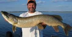 Northern pike—like you've never understood them before (Part 2)