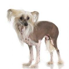 Google Image Result for http://www.terrificpets.com/images/uploads/breeds_07248134920645_1.jpg