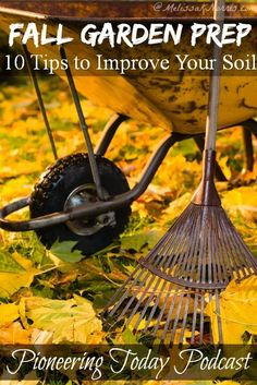 Podcast Fall Garden Prep 10 Tips to Improve Your Soil Now - - Listen to this podcast on fall garden prep. These 10 tips will help you improve your soil now for spring planting with very little work on your part. Farm Gardens, Outdoor Gardens, Organic Gardening, Gardening Tips, Soil Improvement, Vides, Fall Plants, Grow Your Own Food, Autumn Garden