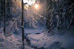 winter sun I - null