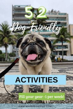 A year of spending time with your dog is a year well spent. Enjoy these 52 dog-friendly activities with your best furry friend.
