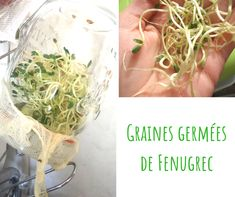 #naturopathie #nutrition #grainesgermees / Non, vous n'êtes pas obligé d'acheter un germoir pour faire germer de belles graines ! Oui, les graines germées sont bonnes pour la santé et apportent vraiment des bienfaits ! Oui, on peut faire germer des céréales et des légumineuses ! Et oui, bien sûr, je vous explique tout dans cet article ! Haricot Azuki, La Germination, Oui, Nutrition, Vitamin E, Rocket Salad, Eat Fruit