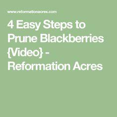 4 Easy Steps To Prune Blackberries Video Reformation Acres