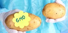 Good info about the soon-to-be-introduced GMO'd potatoes being developed. Buy only organic or better yet grow your own. Potatoes are very easy to grow and can be grown in a bucket if need be! Gmo Facts, Clean Eating, Healthy Eating, Thing 1, Make Good Choices, Foods To Avoid, Natural Supplements, Nutrition Information, How To Know