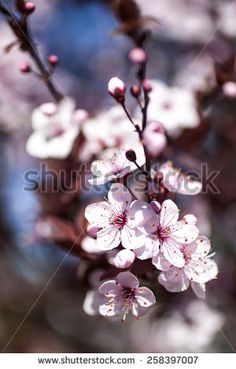 spring  pink flowers with branch and blue sky outdoors