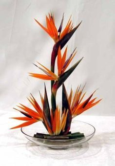 Birds of Paradise in Low Container - Contemporary Flower Arrangements, Tropical Flower Arrangements, Creative Flower Arrangements, Ikebana Flower Arrangement, Church Flower Arrangements, Ikebana Arrangements, Beautiful Flower Arrangements, Beautiful Flowers, Deco Floral