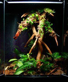 Beautiful contrast between brown and green leafs on the floor. Vivarium, Tropical Terrariums, Frog Tank, Gecko Terrarium, Reptile House, Crested Gecko, Dart Frogs, Reptile Enclosure, Fish Tanks