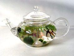 Mini Glass Teapot Green Tea Marimo Moss Ball Aquarium Terrarium  Do you fancy a pot of lovely Green Tea? Here is a beautiful and whimsical quality glass