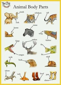 Animal body parts English vocabulary - Trunk, shell, whiskers etc English Idioms, English Vocabulary Words, Learn English Words, English Writing, English Study, English Grammar, English Resources, English Activities, English Lessons