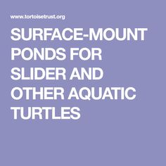 SURFACE-MOUNT PONDS FOR SLIDER AND OTHER AQUATIC TURTLES Turtle Habitat, Aquatic Turtles, Red Eared Slider, Ponds, Sliders, Habitats, Surface, Projects, Log Projects