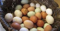 Fun facts about eggs (that might not be true) Part One Eggs In A Basket, Brown Eggs, Garden Animals, Chickens Backyard, Fabulous Foods, Holidays And Events, Easter Eggs, Fun Facts, Earth
