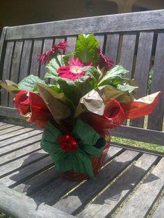 Gerberas -La Violeta Flores