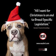 Help put the end to the BSL.