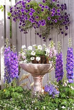 Petunias and delphiniums
