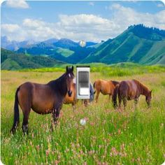 """Rikki KnightTM Horses Grazing on Meadow - Single Toggle Light Switch Cover by Rikki Knight. $13.99. For use on Walls (screws not included). Washable. Masonite Hardboard Material. 5""""x 5""""x 0.18"""". Glossy Finish. The Horses Grazing on Meadow single toggle light switch cover is made of commercial vibrant quality masonite Hardboard that is cut into 5"""" Square with 1'8"""" thick material. The Beautiful Art Photo Reproduction is printed directly into the switch plate and n..."""