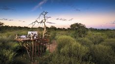 Bucket list hunting? Try this once in a lifetime experience of sleeping under the stars of the African sky. An experience like none other with nothing but you and your surroundings; the way nature intended. Click to find our favorite star bed experiences. #explorer #explorersafari #safari #africa #travel #bucketlist #travelinspo #stars #underthestars #outdoors #inthewild #campout #nature #starrynight #sleepunderthestars #africansky #adventure #starbed #stargazing #stargazers #milkyway #universe South Africa Holidays, Visit South Africa, Private Games, Private Yacht, Africa Travel, Us Travel, Travel Style, Tree Camping, Herd Of Elephants