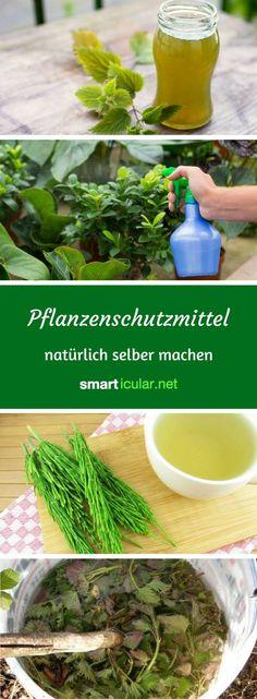 Vergiss chemische Spritzmittel, denn aus Pflanzen kannst du effektive, umweltfreundliche Pflanzenschutzmittel gegen Schädlinge und Krankheiten selber machen.