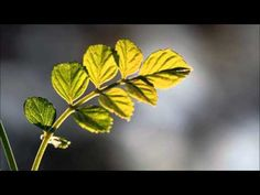 Plants Using Quantum Physics To Survive?