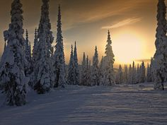 Winter Sunset Weather Snow Skihill Trees