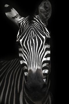 stripes (cc) (by marfis75)