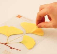 $3 Ginko Leaf Post-It Notes