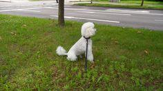 Der weiße Hund am Strassenrand + http://htl.li/cPUCV