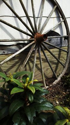 Onas Wagon Wheel