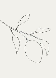 Drawing Pencil sketch by Tristan B-- cleaned digitized with Lettering Rx. Simple Line Drawings, Easy Drawings, Sharpie Drawings, Minimal Drawings, Botanical Illustration, Illustration Art, Art Illustrations, Actions Photoshop, Realistic Eye Drawing