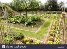 Vegetable plot at Potager Garden, Constantine, Cornwall, England, UK Stock Photo, Royalty Free Image: 108375897 - Alamy